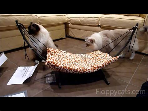 How To Put A Hammock Together by How To Put Together The Trixie Cat Bed Hammock