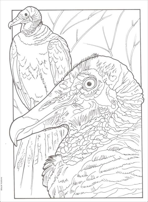 Pdf Creative Birds Number Coloring by Number Names Worksheets 187 Color By Number Coloring Book