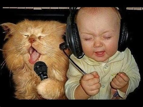 cat songs songs to sing to your cat and other feline favourites books images photos pictures page 21