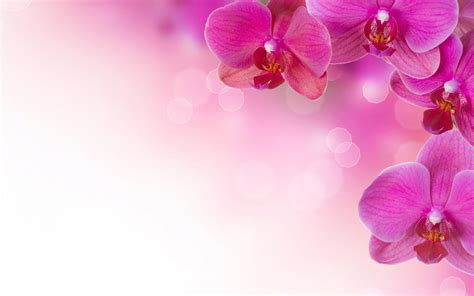 wallpaper floral pink flowers backgrounds wallpaper cave