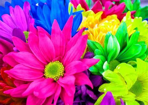 imagenes para fondos de pantalla flores fotos de flores para fondo de pantalla fondos de