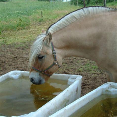fjord zout water pavo paardenvoer geeft advies over elektrolyten