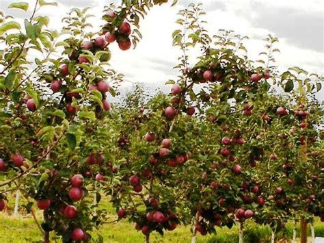 Mekar Sari Minuman Sari Buah informasi tempat wisata taman buah mekarsari