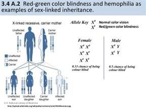 color blind genetics 3 4 inheritance