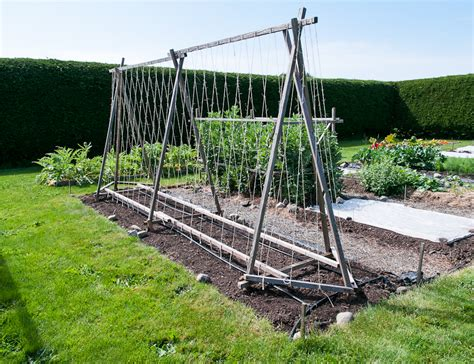 Pole Bean Trellis Height pole bean support island kitchen gardens