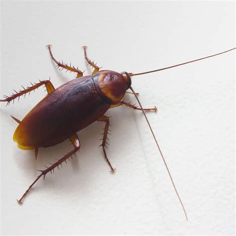 cockroaches bite   frequently asked questions