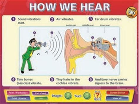 noises we books how we hear sound interactive white board activities