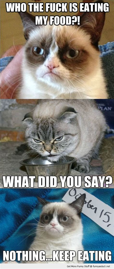 Cat Food Meme - grumpy angry cat eating my food lolcat animals funny pics