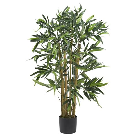 3 foot biggy bamboo tree potted 5281