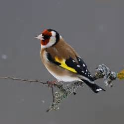 participez au comptage des oiseaux des jardins 199 a se