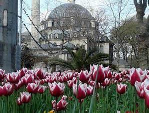 wallpaper bunga tulip di belanda my profil bunga tulip belanda