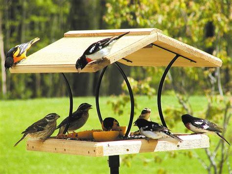 birds choice large cedar fly through bird feeder quality