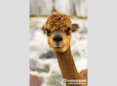"""Natur und Umwelt - german.china.org.cn - Lustige """"Frisuren ... .txt"""
