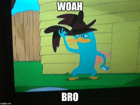 Perry The Platypus Meme - image tagged in perry the platypus imgflip