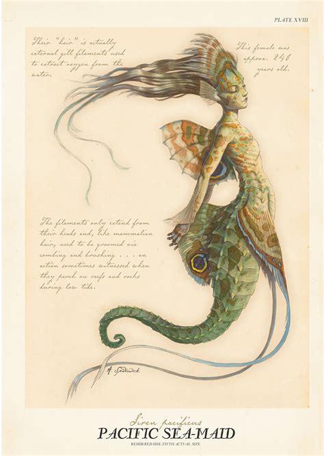 libro arthur spiderwicks field guide tony diterlizzi illustration history