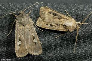 Moths In The Wardrobe by Moths Wreaking Havoc After Mild Winter And Early