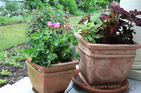 easy to create container gardens for houston summers