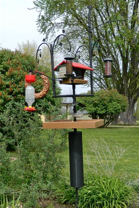 best 20 wild birds ideas on pinterest wild bird feeders