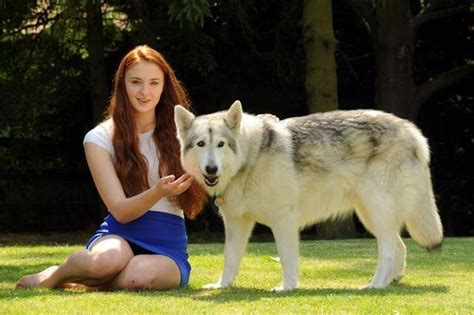of thrones breed are they wolf breeds doglers