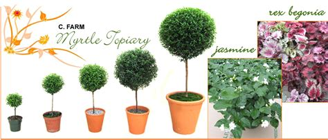 myrtle topiary bc canada