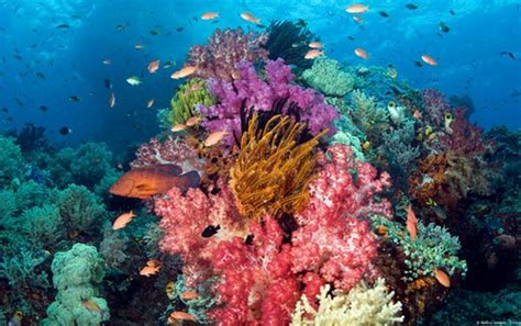 the beautiful colors of coral reefs nature babamail