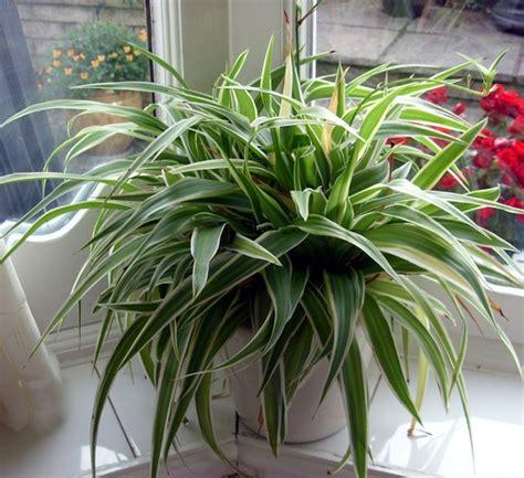 house plants annonymous  jacquie grows