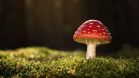 Pilze Im Garten Giftig Oder Essbar