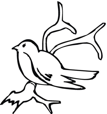 olive branch coloring page coloring pages