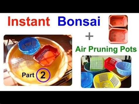 Instant Bonsai Just Remove Genes by 17 Best Images About Bonsai Experiments By Vinny Chirayil