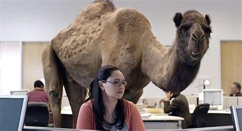 chris sullivan voice over meet chris sullivan the voice of the geico camel hump day