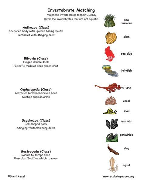 Invertebrate Matching Invertebrates Animals Names