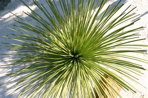 Botanischer Garten Pflanzenverkauf by Zum Pflanzenverkauf