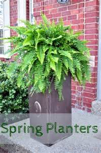 Ferns In Planters by Planters Cleverly Inspired