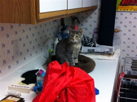 how to keep cats out of a room how do you creatively keep your cats out of certain places catster