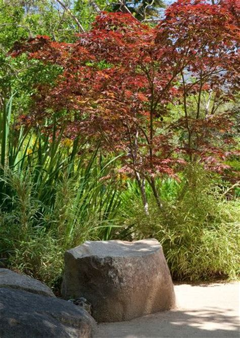 Maple Rock Gardens 1000 Ideas About Japanese Rock Garden On Pinterest Japanese Gardens Rock Garden Design And