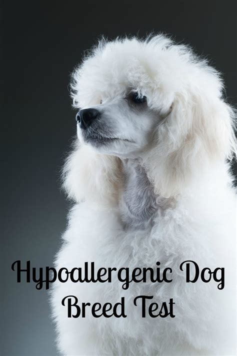 breed test hypoallergenic breed test vills