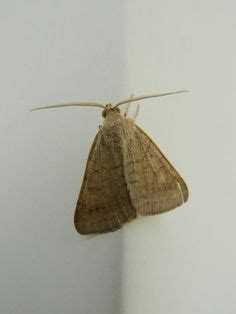 cleaners on pantry moths go green and