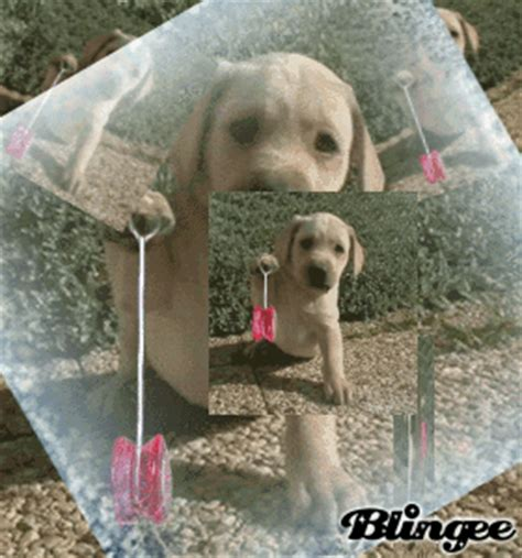 chien qui bouge image 131292980 blingee