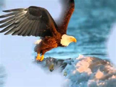 Fly As An Eagle rogers fly eagle fly