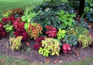 Small Shade Garden Ideas Small Flower Bed Ideas Here Is A Closer Look At The Coleus And Hosta Planted The Tree