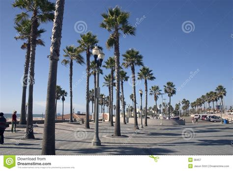 California Palm kalifornien palmen lizenzfreie stockfotografie bild 38457