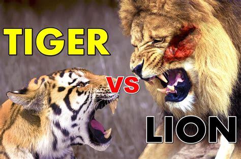 Fight Like A Tiger Win Like A Chion Darmadi Darmawangsa 1 vs tiger real fight to who would win