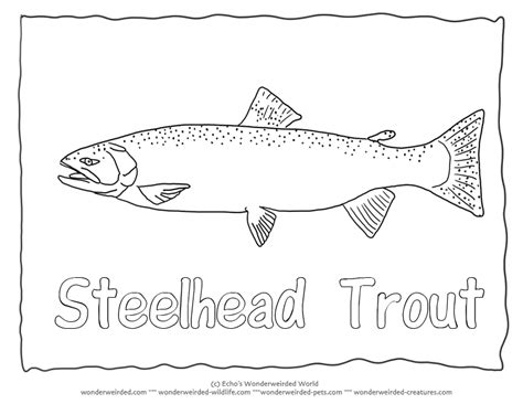 78 apache trout coloring page native trout fly