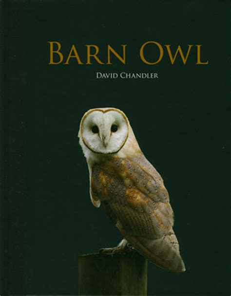 barn owl ebook barn owl by david chandler reviews discussion