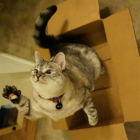 Iconic Cat Story the story of instagram s most cat nala who has 3