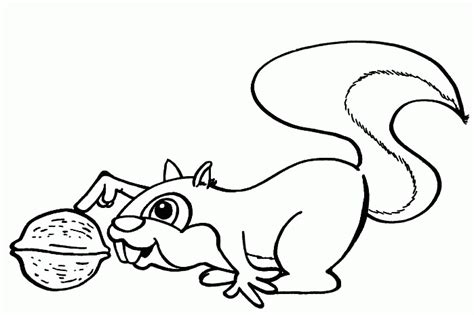 squirrel coloring pages coloringpagesabc com