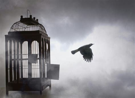 how to your to stay in the cage we were birds of a feather we were always together and i never will forget all the