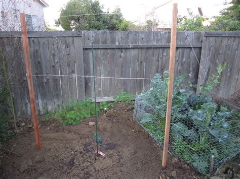 how to build grapevine trellis bountiful backyard