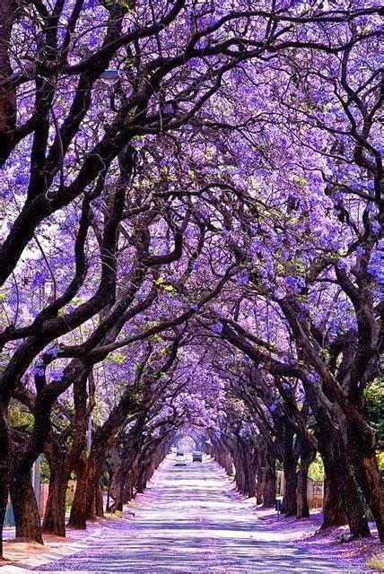 17 best ideas about tree tunnel on pinterest northern