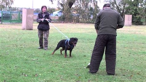 protection trained rottweilers protection rottweiler